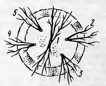 1. Расположение пяти деревьев на сопке (вид сверху)