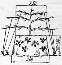 2. Центральное дерево и земляника на склонах сопки (вид сбоку)