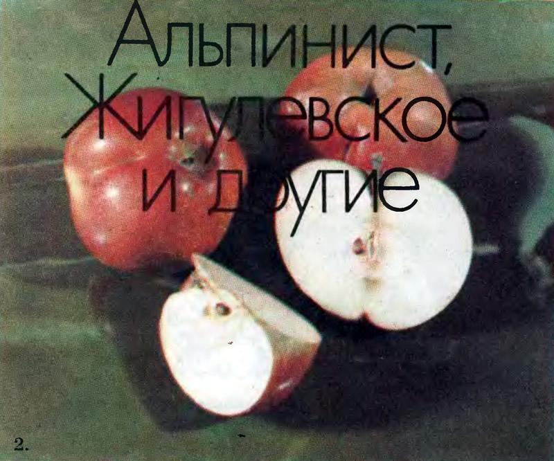 2. Киргизское зимнее