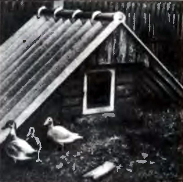 3. Домик, в котором можно разместить птичий молодняк летом