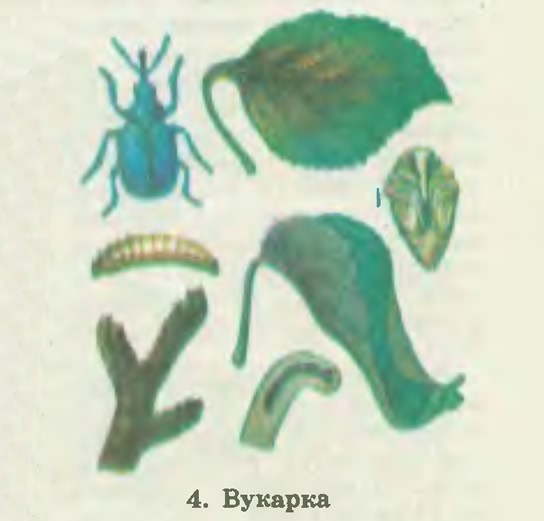 4. Byкарка