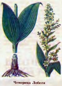 Вредные и ядовитые растения для животных
