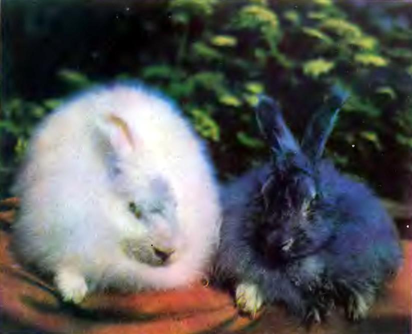 Черный и белый пуховые кролики