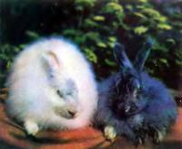 Опыт разведения пуховых кроликов