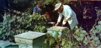 Что же беспокоит пчелиную семью?