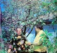Обрезание вишни и сливы во время цветения