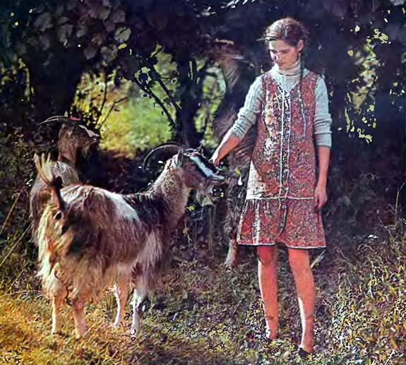Девочка кормит козу