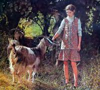 Выращивание и уход за пуховыми козами