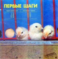 Советы по разведению и выращиванию цыплят