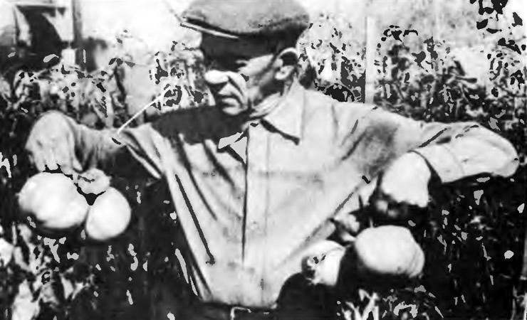 Г. Катюшин со своими помидорами