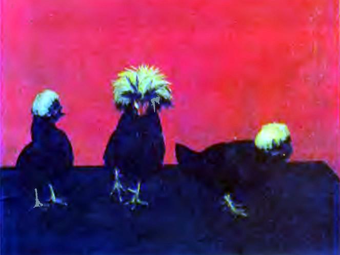 Голландские белохохлые из коллекции В. А. Голяченко