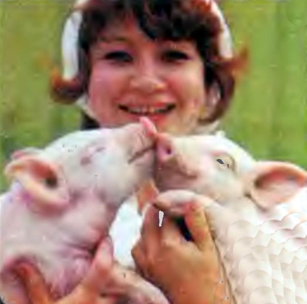 Хряк и свинка