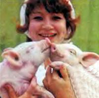 Покупайте сразу двух поросят: хрячка и свинку
