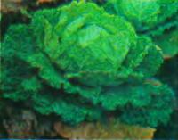 Капуста савойская
