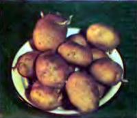 Картофель сорта Незабудка