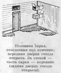 Кохинхины из хозяйства Г. Г. Костюкова