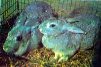 Кролики в своей клетке