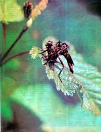 Ктыри на листе растения