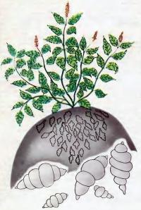 Стахис — новая овощная культура