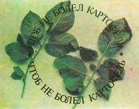Листья картофеля, пораженные фитофторой