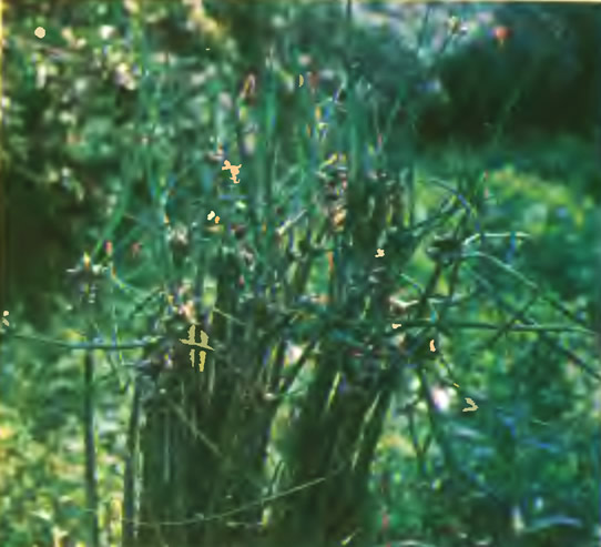 Многоярусный лук