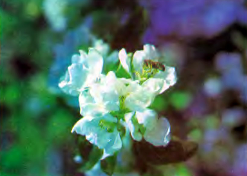 Насекомое на цветке