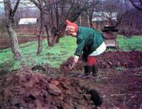 Подготовка почвы огорода осенью