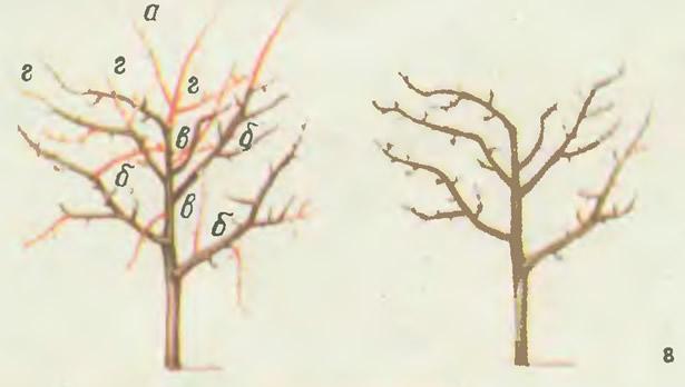 Обрезка молодого запущенного дерева