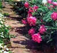 Однофактурная садовая дорожка