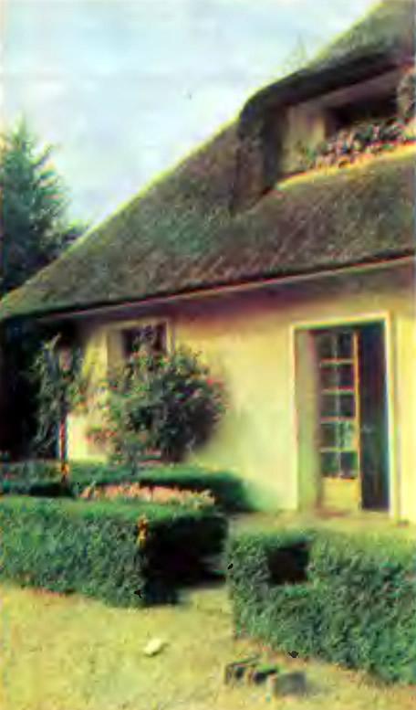 Оформленные кусты вокруг домика
