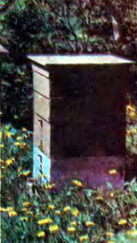 Вариант современных ульев для домашних пчел
