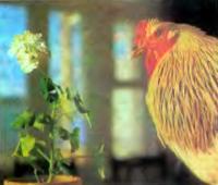Привлекайте детей для добычи корма для птицы