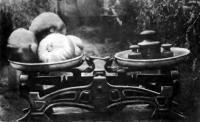 Помидоры-богатыри на весах
