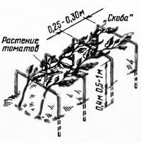 Помидоры на опорах типа «скоба»
