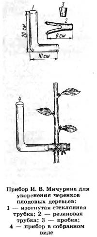 Прибор И. В. Мичурина для укоренения черенков плодовых деревьев
