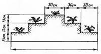 Размер пирамиды для зеиляники