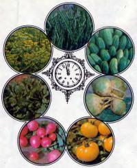 Редис, кресс-салат, укроп, лук, огурцы, брюква, помидоры