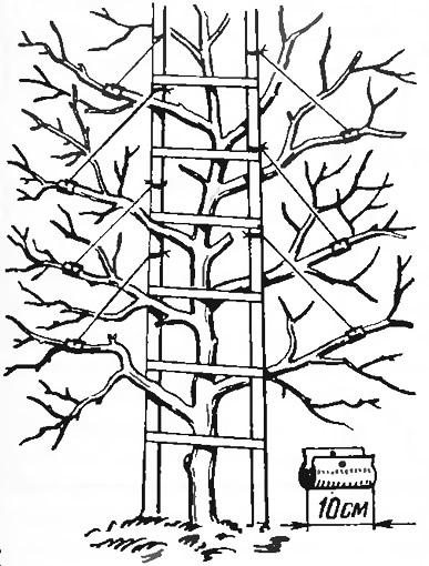 Рис. 1. Планки в виде лестницы