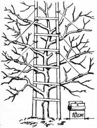 Варианты плодосъемников для высоких деревьев
