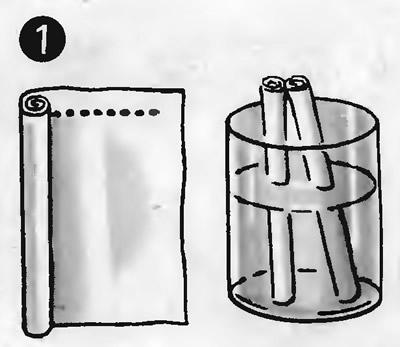Рис. 1. Рулон листа с семенами