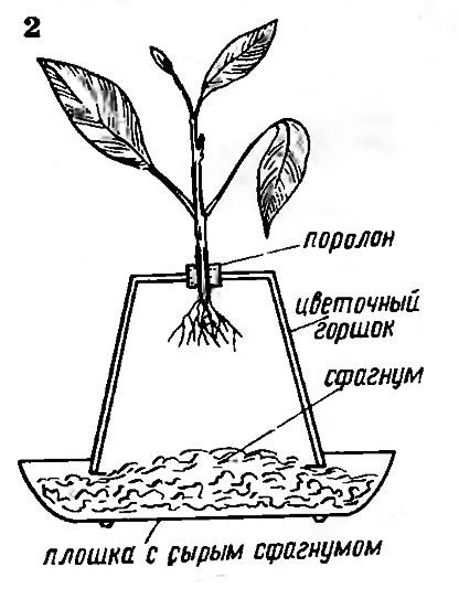 Рис. 2. Плошки с сырым сфагнумом