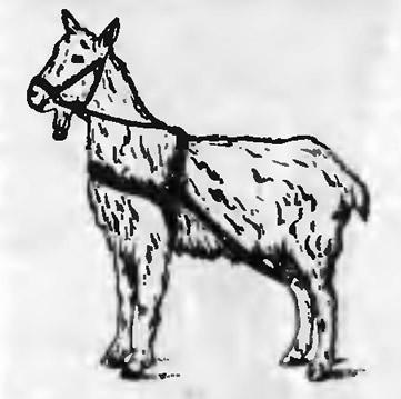Рис. 2. Уздечка без уздил для козла