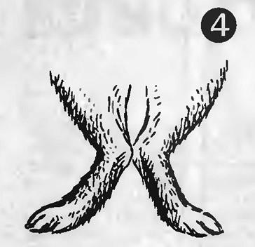Рис. 4. Кролики с искривленными ногами