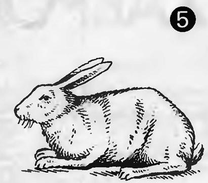 Рис. 5. Кролики с угловатой спиной