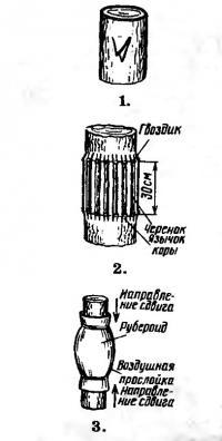 Прививки «мостиком» из черенков