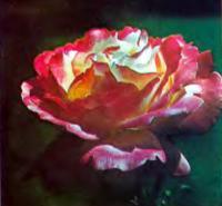 Роза сорта Деези (чайно-гибридная)