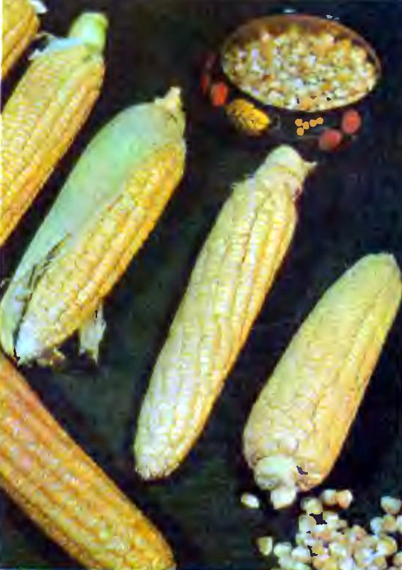 Сахарная кукуруза Ароматная