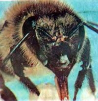 Шум улья: слушаем что же беспокоит пчел