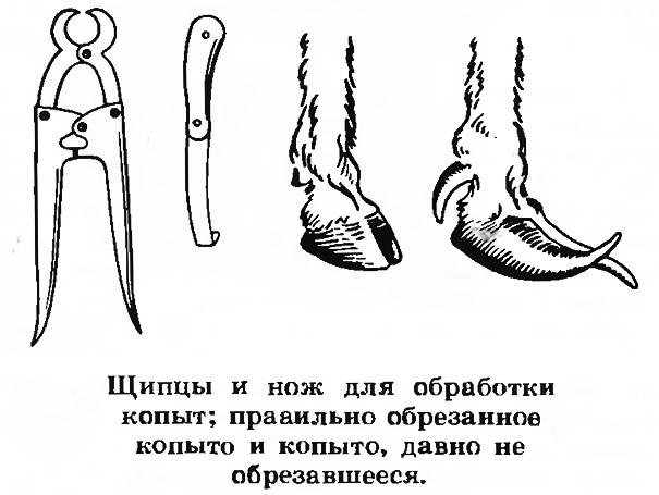 Щипцы и нож для обработки копыт