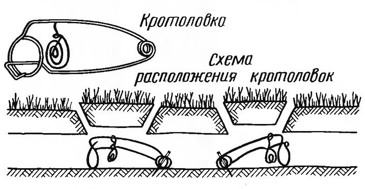 Схема  расположения кротоловок